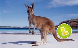 Kaenguru am Strand