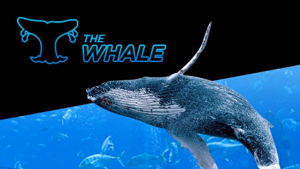 online casino 888 orca auge